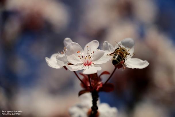 """Σεμινάριο μελισσοκομίας από τον ΚοιΣΠΕ """"Διάπλους"""""""